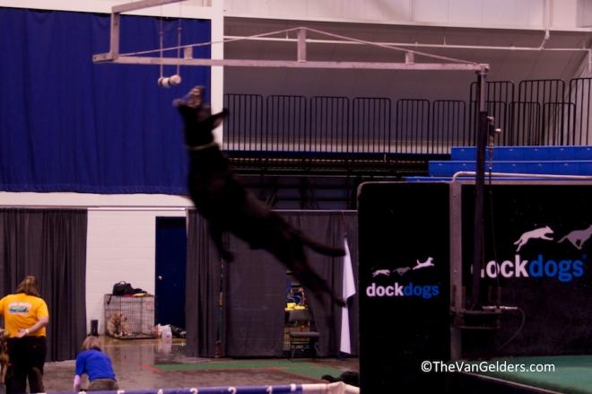 Dock Dog 2012 2