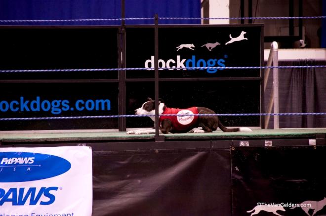 Dock Dog 2012 5