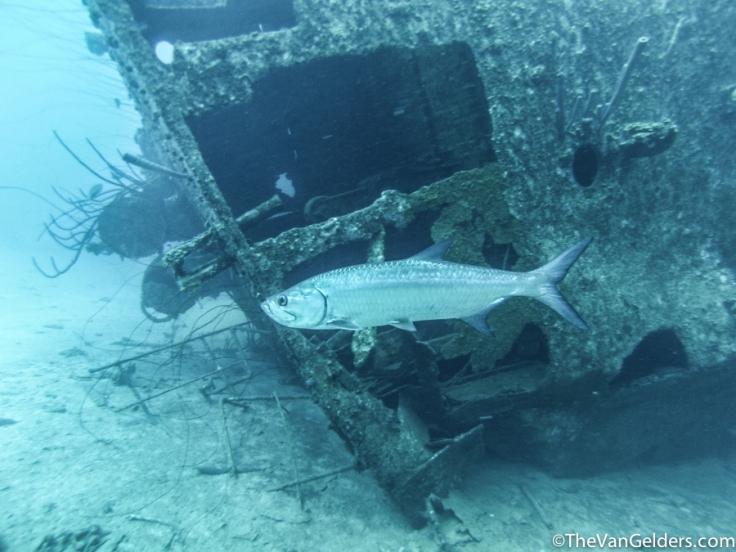 Dive Cert (3 of 5)