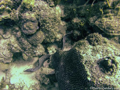 Eels (1 of 8)