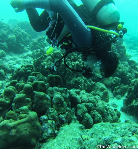 Eels (3 of 8)