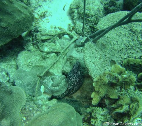 Eels (8 of 8)