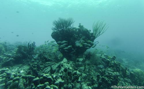 Fish Finder (5 of 14)