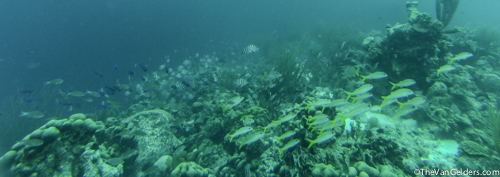 Some reefs are incredibly active with life